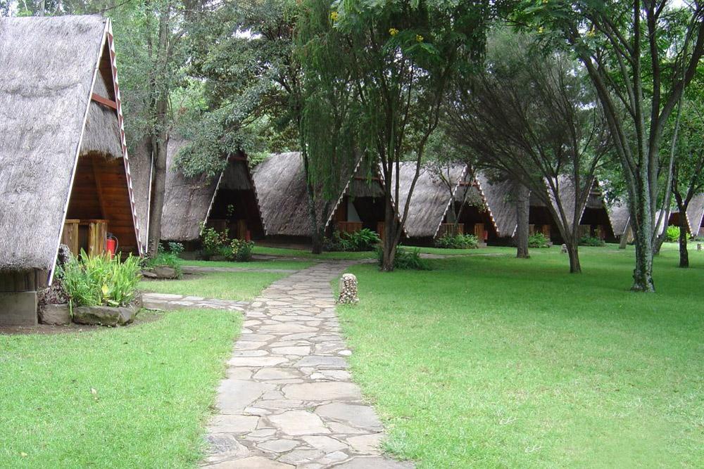 Mara Buffalo Camp