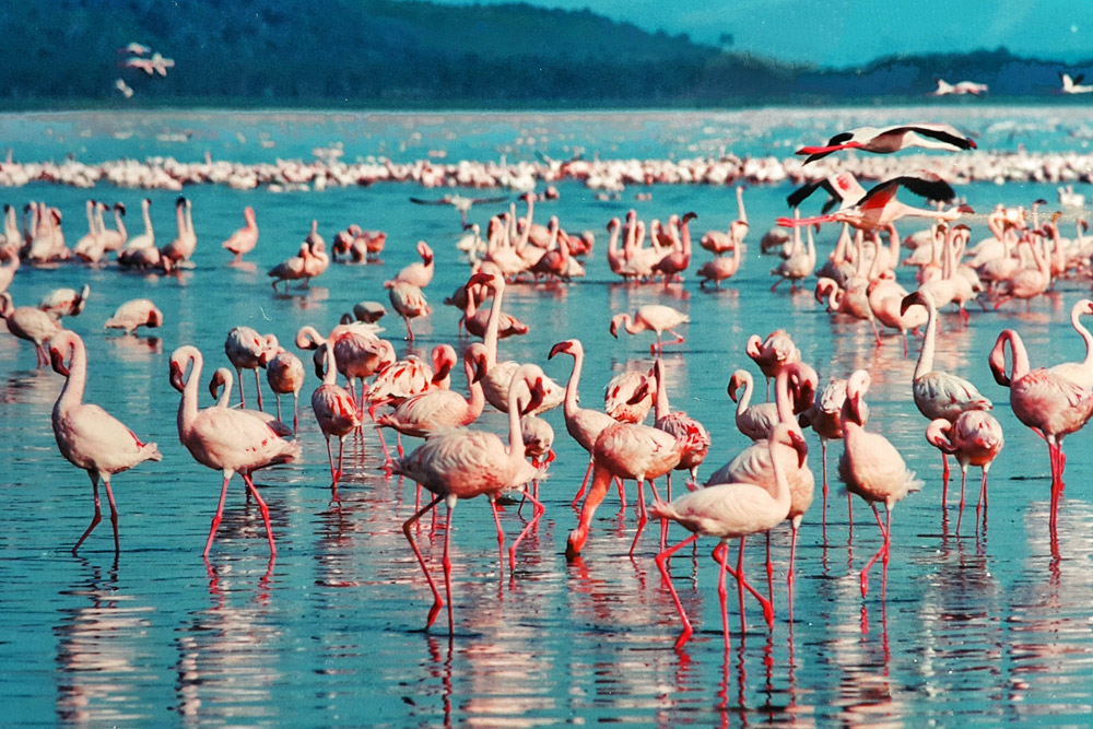 Lake Baringo National Park