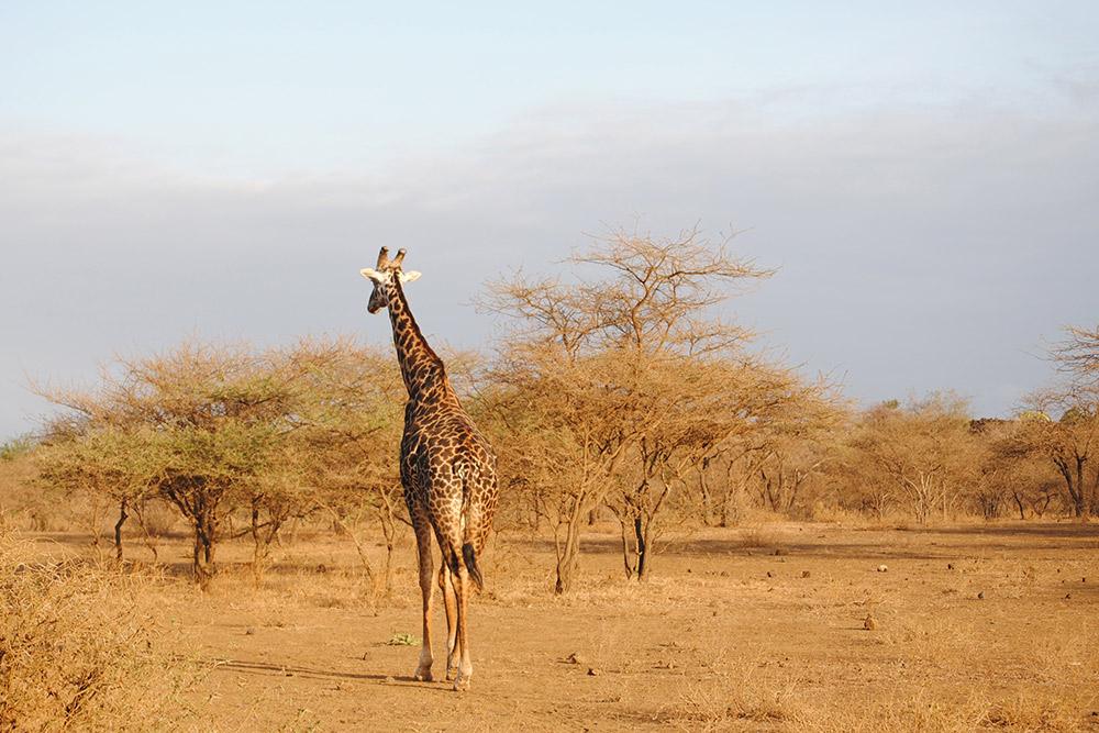 Marsabit National Reserve