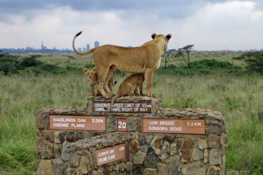 3 Days Safari to Tsavo West & Tsavo East - SGR from Nairobi
