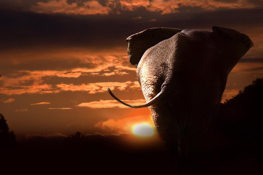 2 Days Masai Mara