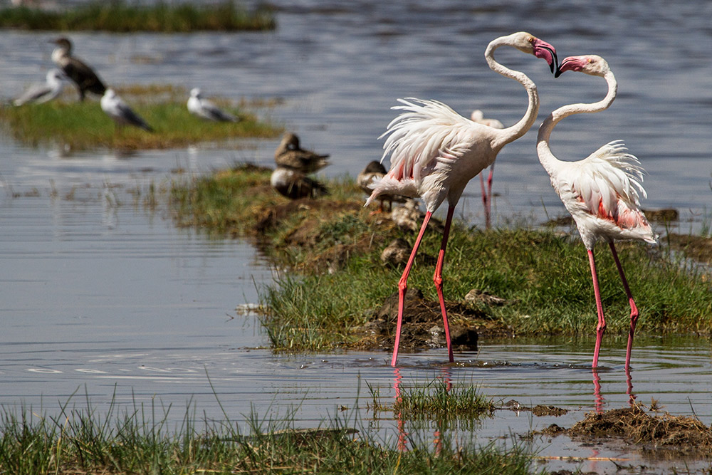 2 Days  Lake Nakuru & Naivasha