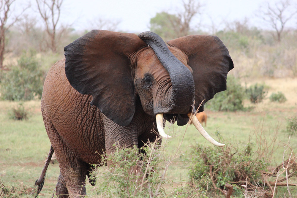 3 Days Tsavo East/West & Amboseli