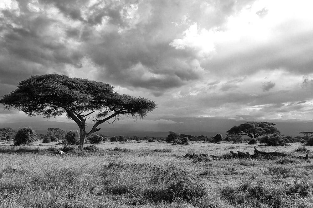 3 Days Tsavo West & Amboseli