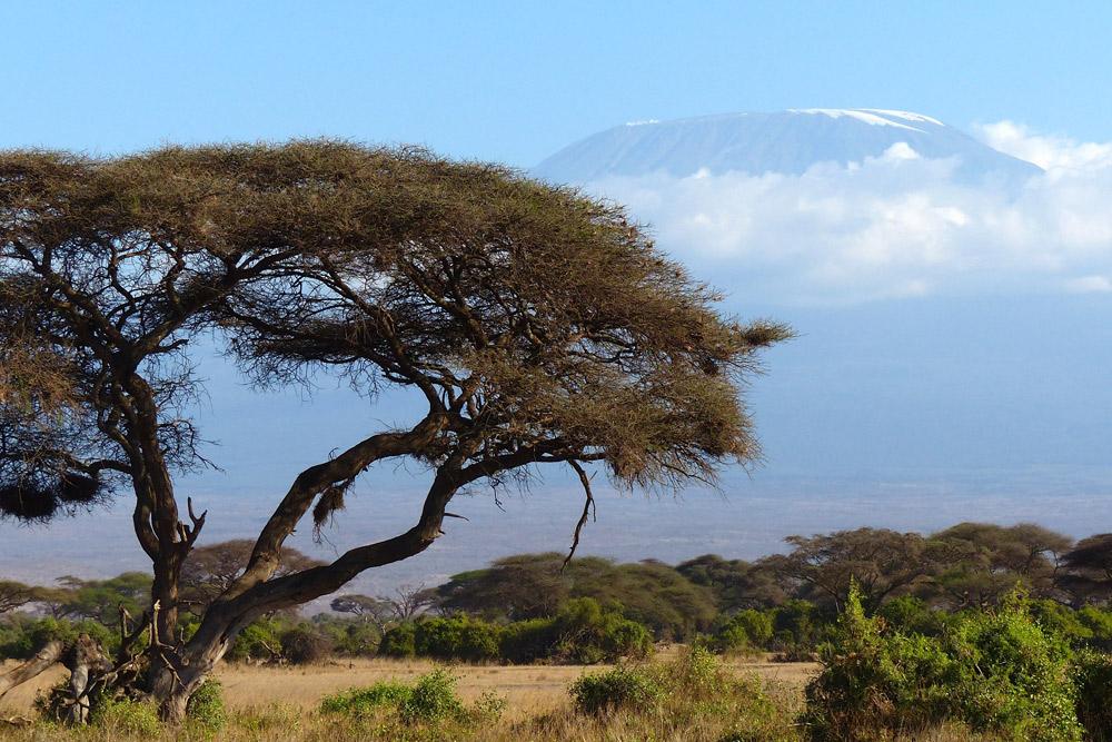 3 Days Ol - Pejeta Game Sanctuary &  Mt Kenya National Park