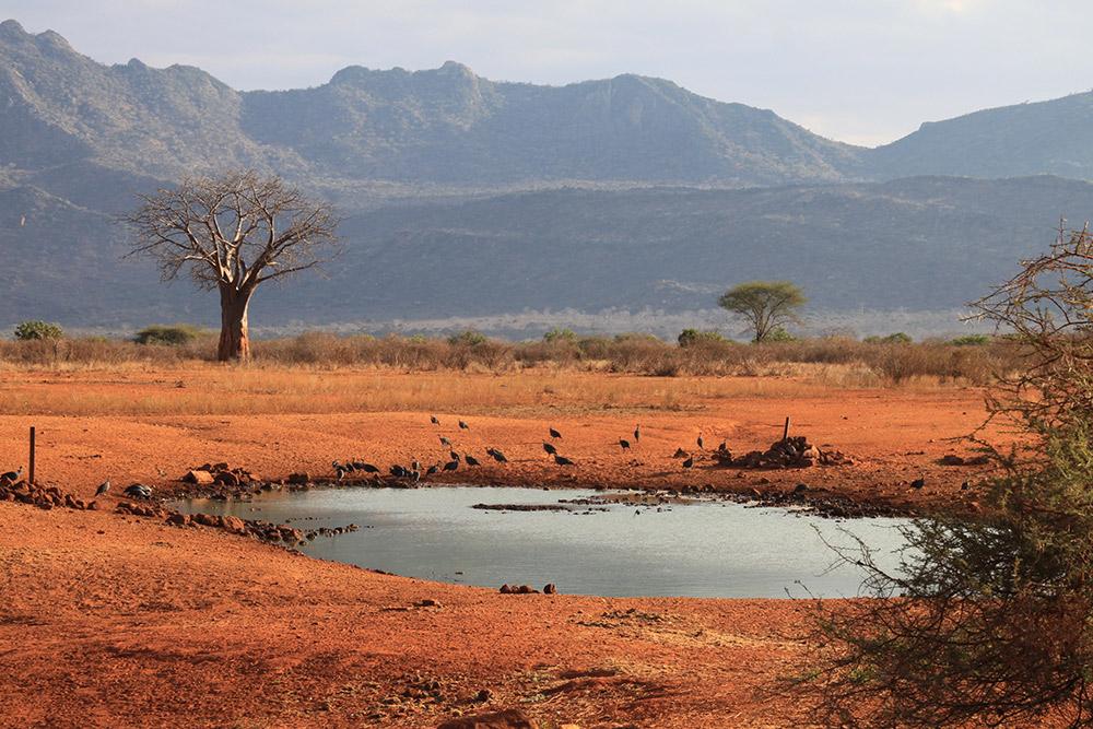 4 Days Tsavo West, Amboseli & East