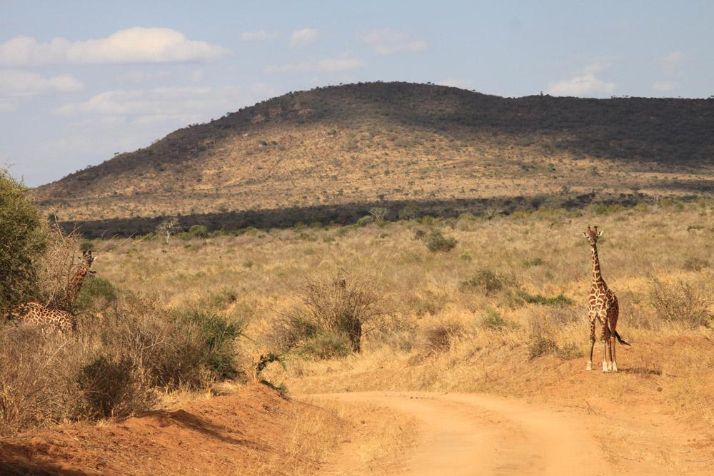 4 Days Tsavo East, West and Taita