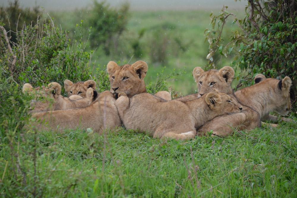 4 Days Masai Mara