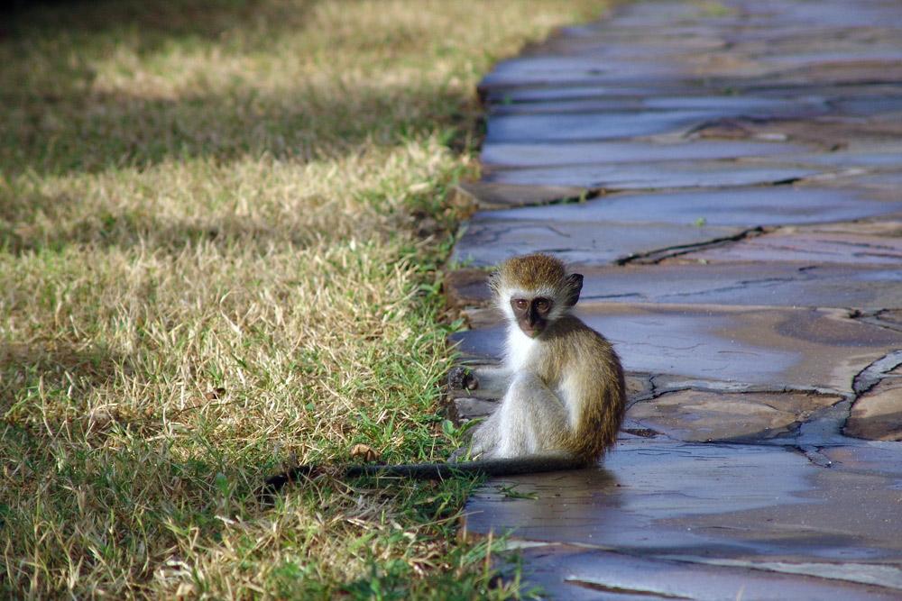 4 Days Amboseli ,Tsavo West & Tsavo East