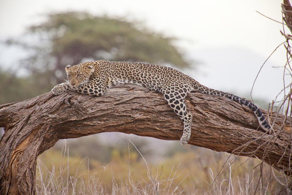 6 Days Amboseli, Naivasha & Masai Mara