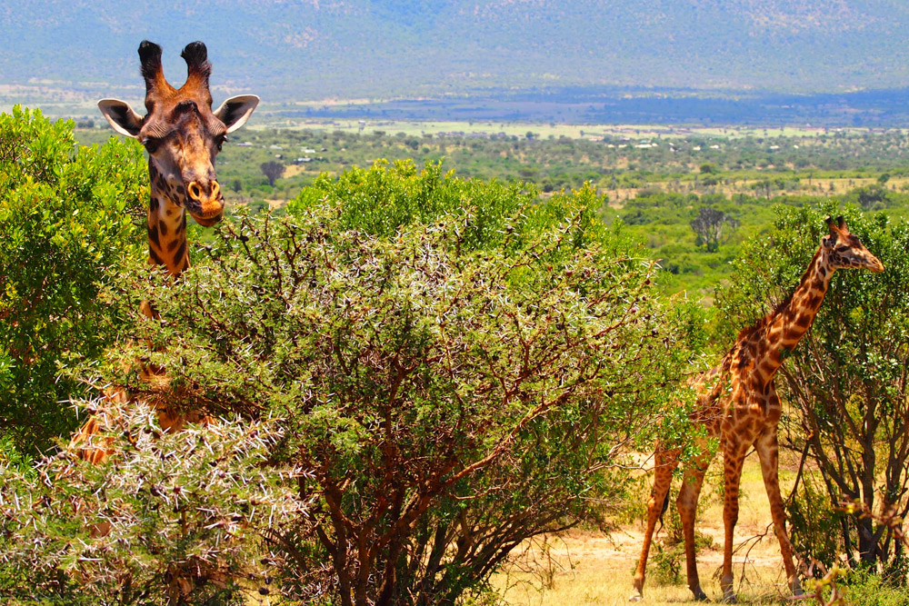 6 Days Samburu, Nakuru & Masai Mara