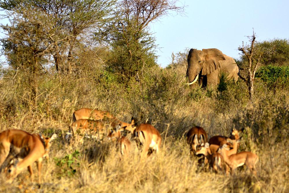 8 Days Amboseli, Naivasha, Nakuru & Masai Mara