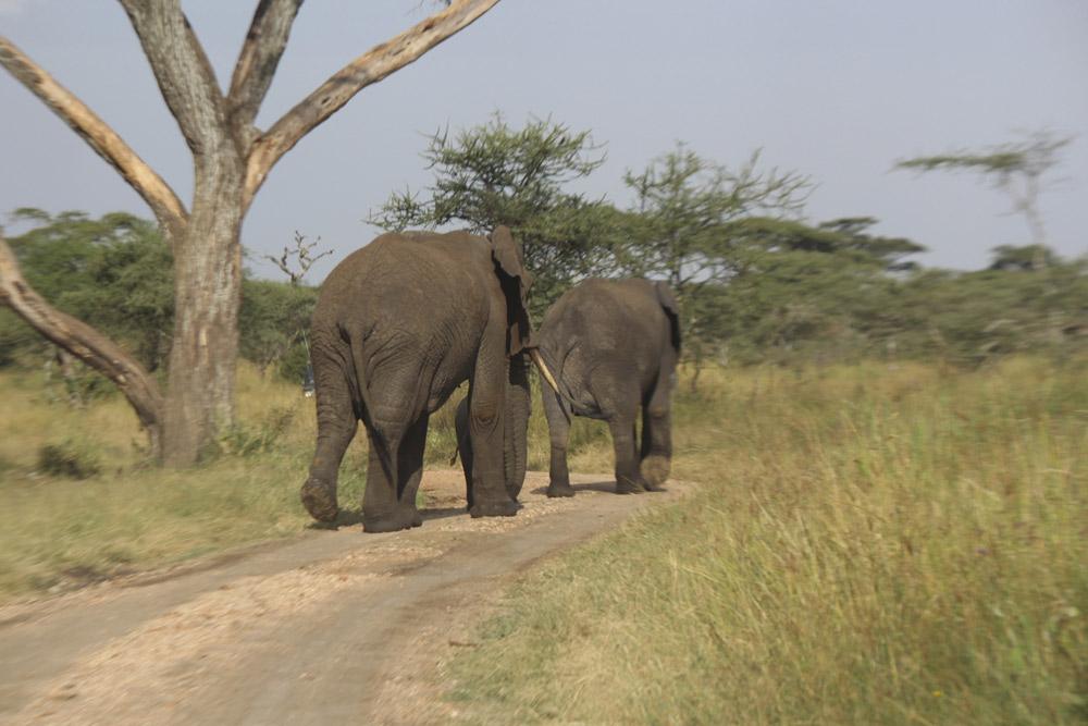 8 Days Samburu, Ol Pejeta, Nakuru & Masai Mara