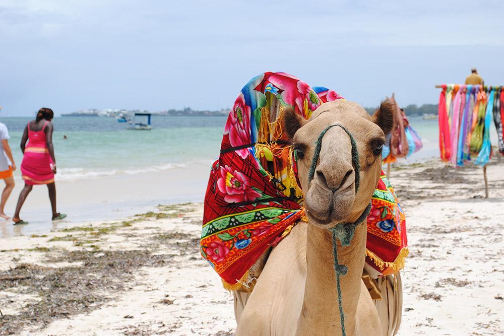 8 Days Best of Kenya - From Mombasa