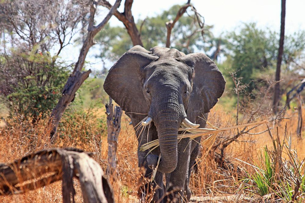 7 Days Samburu, Ol Pejeta, Nakuru & Masai Mara