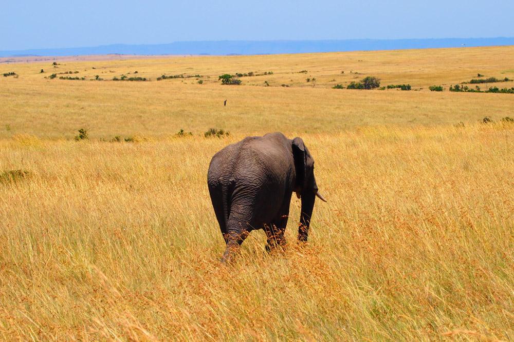 7 Days Amboseli, Lake Naivasha, Nakuru & Masai Mara