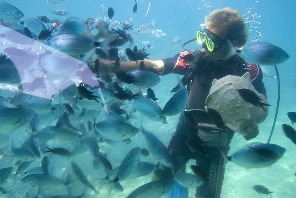 Scuba Diving Excursions, Diani