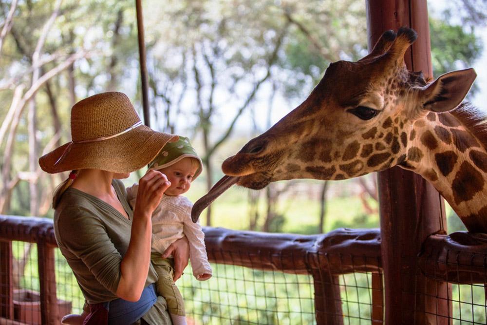 Giraffe Centre Excursion