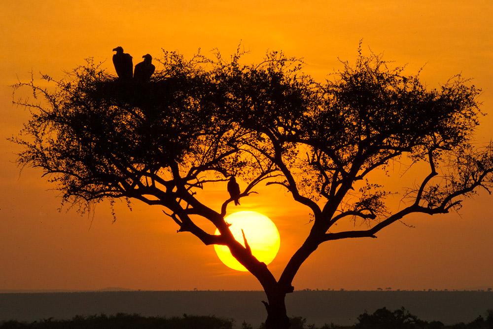 3 Day Amboseli Safari – SGR from Mombasa