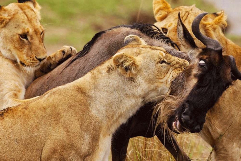 1 Day Amboseli