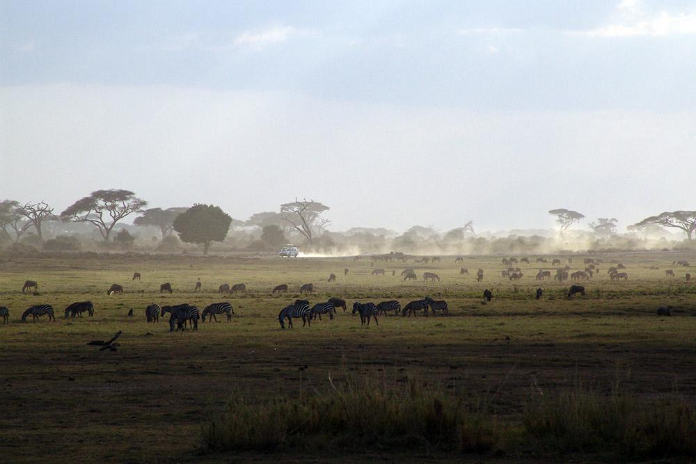 5 Days Tsavo East/Amboseli, Tsavo West & Saltlick