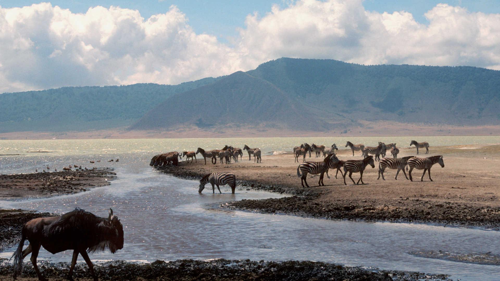 5 Days Lake Manyara,Ngorongoro & Serengeti
