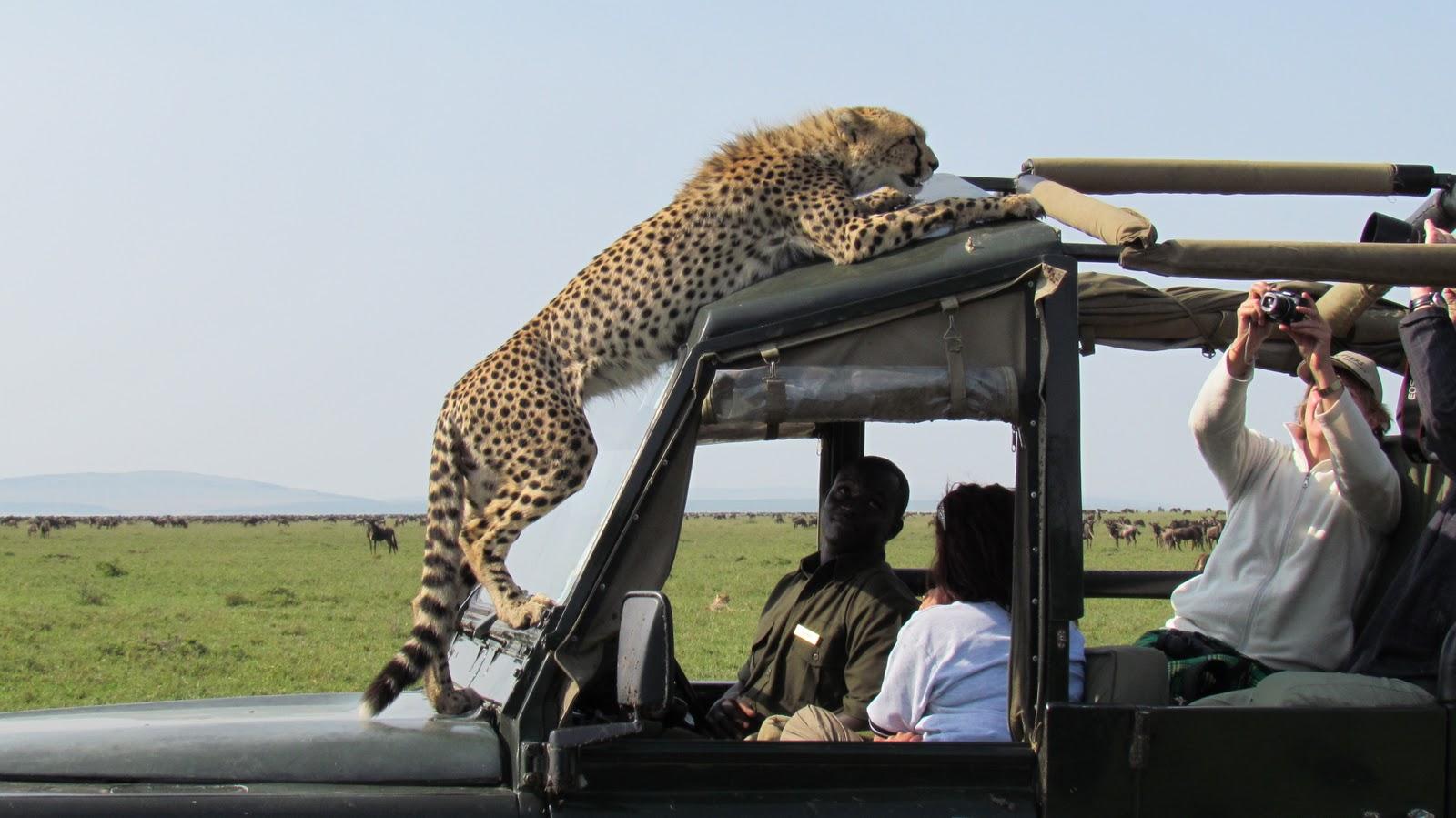 2 Day SGR Safari Tsavo East from Mombasa