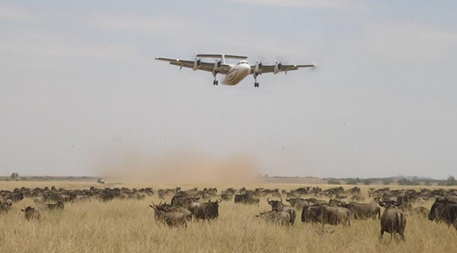 2 Days Masai Mara (Mombasa/Diani) Air Safari