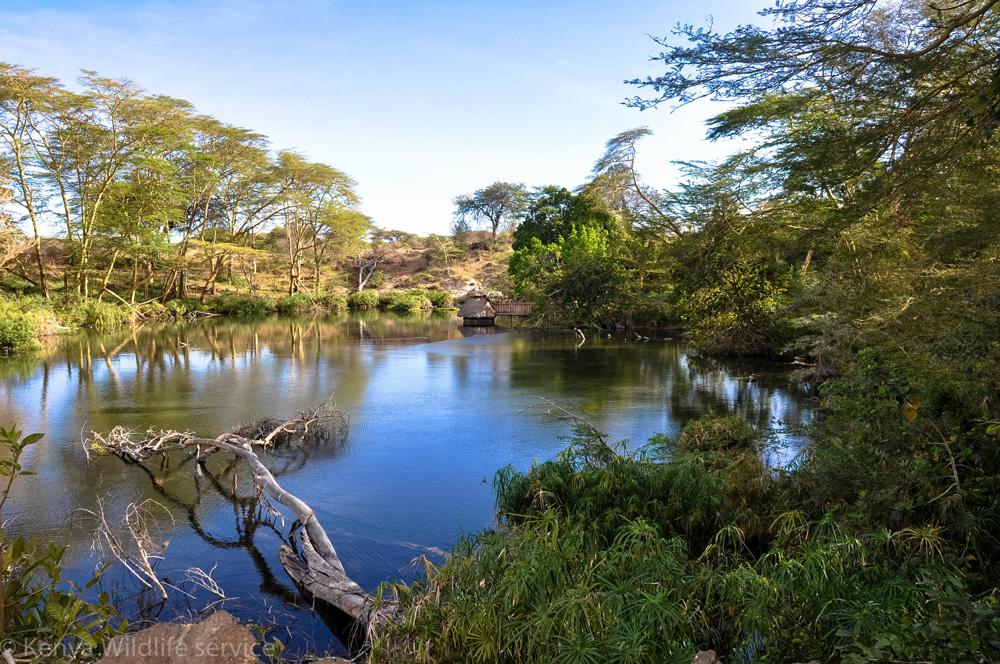 3 Day SGR Safari from Tsavo East & Saltlick from Mombasa