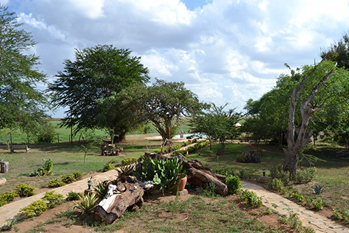 Day 2: Full Day Amboseli
