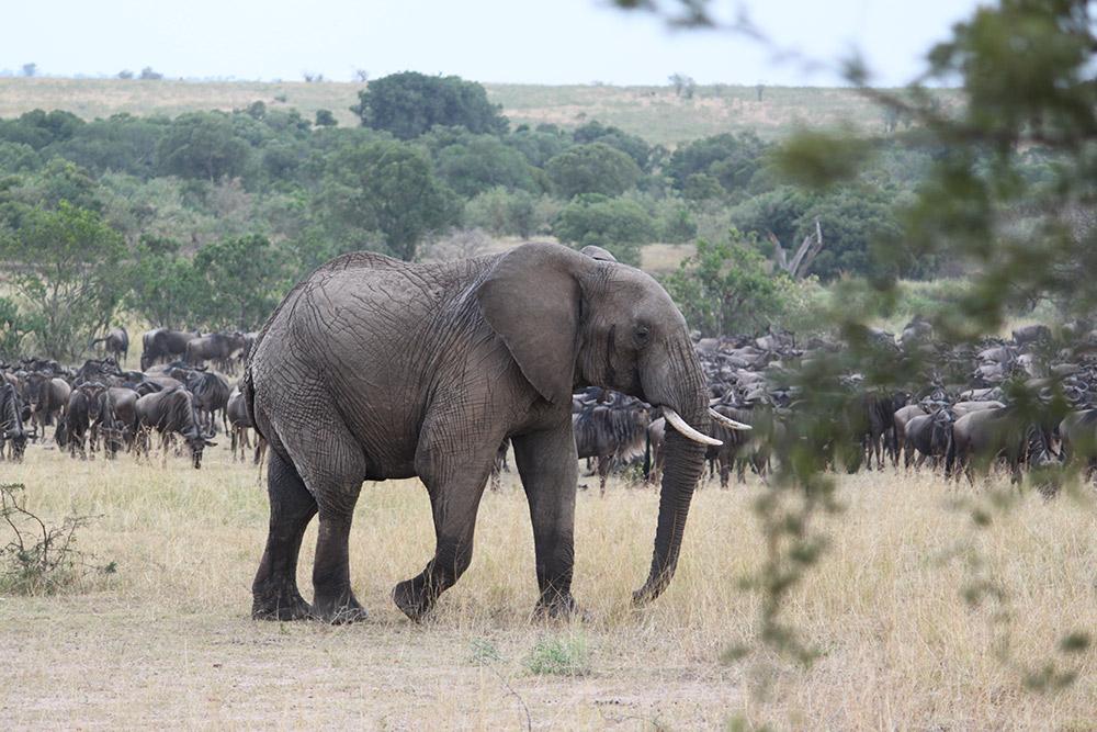 Day 1; Nairobi - Amboseli