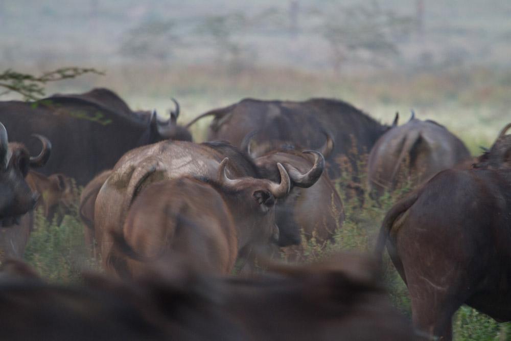 Day 4; Nakuru - Amboseli