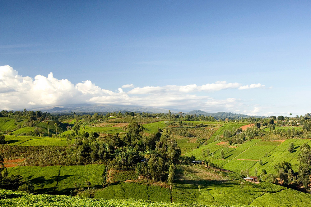 Day 1; Amboseli - Naivasha