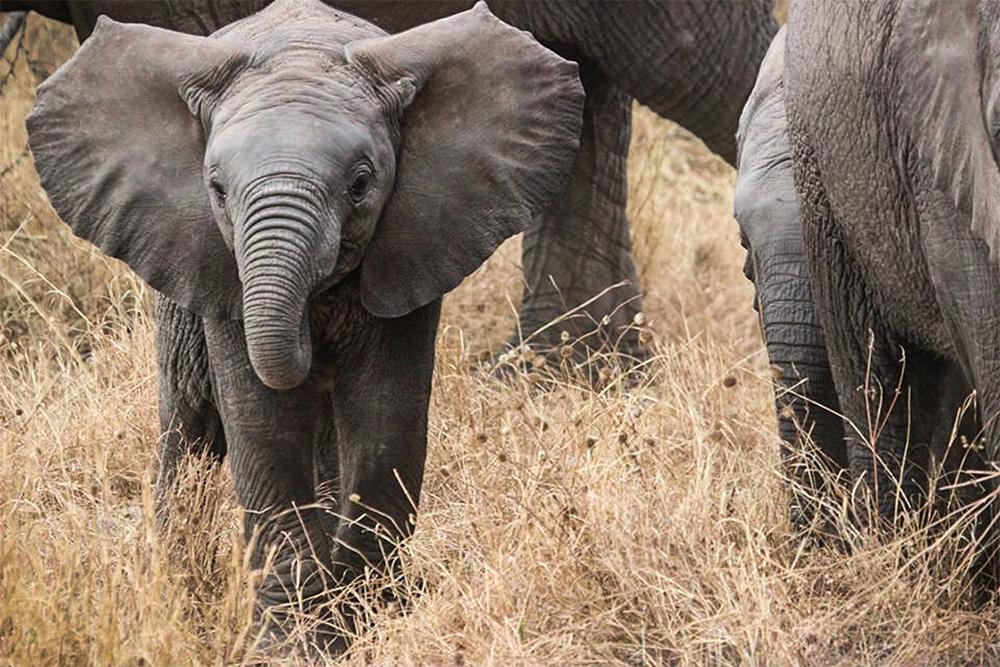 Day 2; Masai Mara